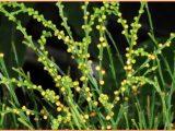 Klasifikasi Tumbuhan Paku (Pteridophyta)